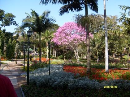 Spring in Mitchell Park, Durban