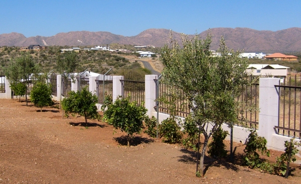 Kaire Mbuende's garden, with the Auas mountains in the background. 9 May 2013