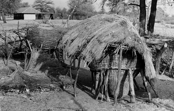 Ovambo corn storage bin. It kis raised from the ground to protect the corn from insects, and covered with a thatched roof to protect it from rain and birds. Ovambo corn is nutritious, and at that time there was no malnutrition in Ovamboland, which was self-sufficient in food