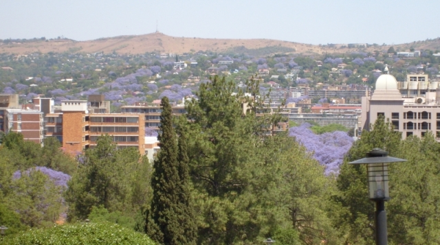 Pretoria is best, of course, at jacaranda time