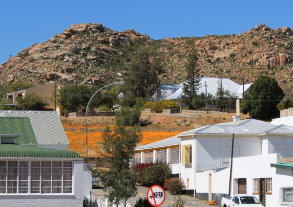 Springbok, Northern Cape, with fields of orange Namaqualand daisies between the houses and the hills.