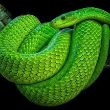 greenmamba